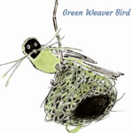 green-weaver-bird